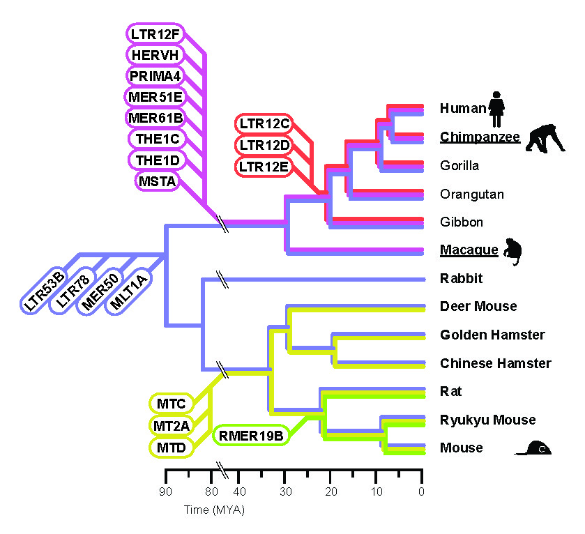 LTR Retrotransposon Evolutionary Age
